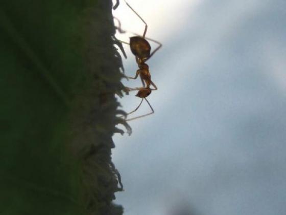 *Pest Control